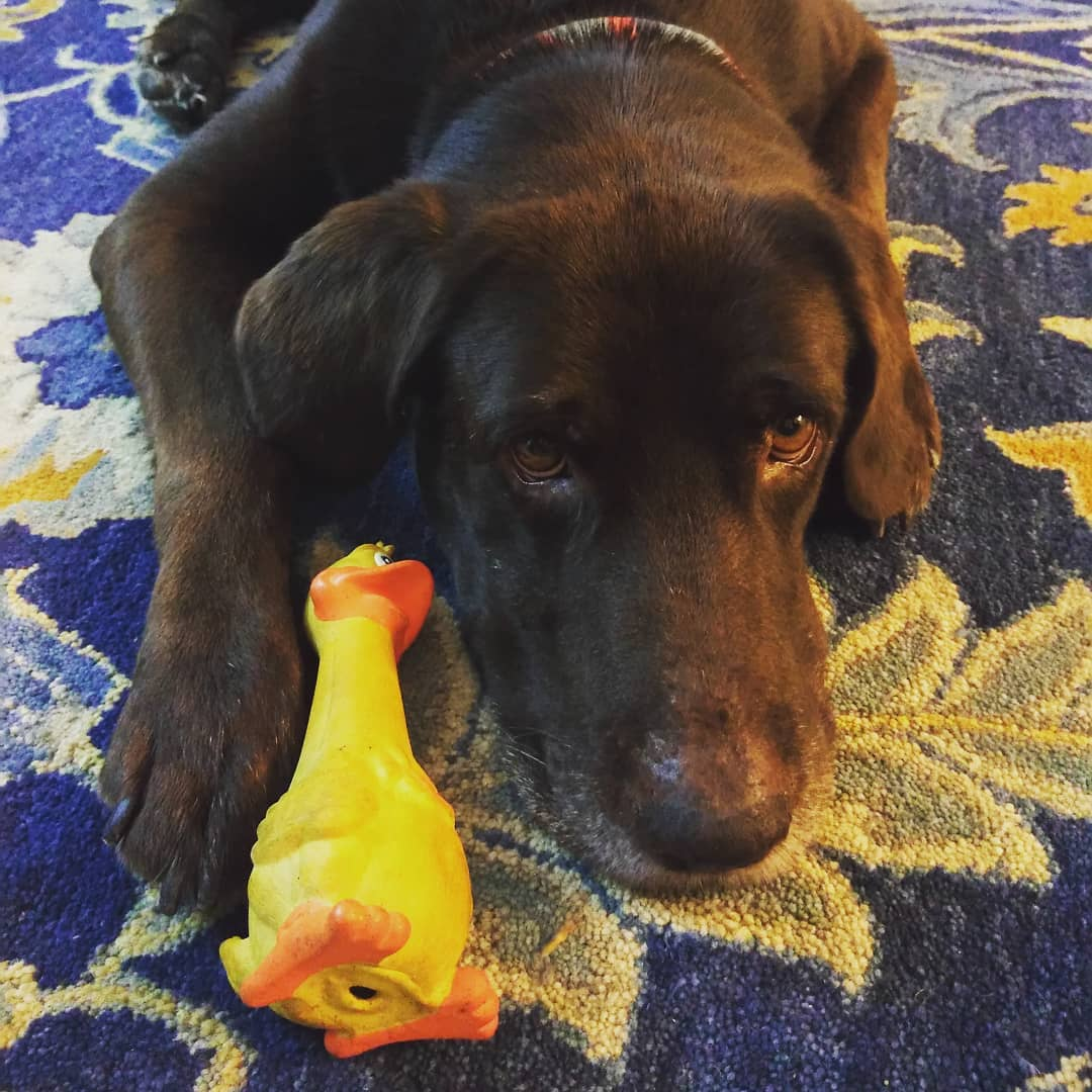 I found this duckie today! It belonged to Max before but now it's mine